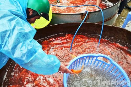 Tấp nập chợ cá ông Công, ông Táo lớn nhất Hà Nội - 5