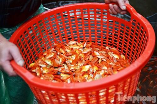 Tấp nập chợ cá ông Công, ông Táo lớn nhất Hà Nội - 7