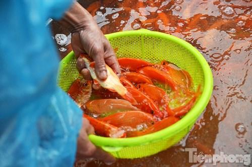 Tấp nập chợ cá ông Công, ông Táo lớn nhất Hà Nội - 9