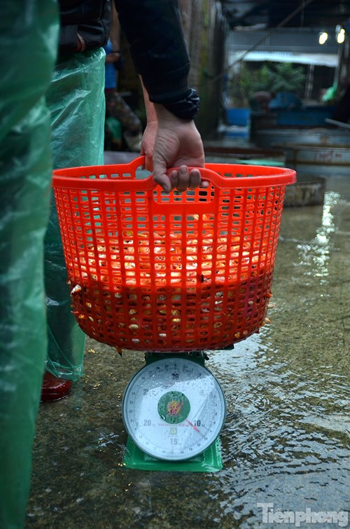 Tấp nập chợ cá ông Công, ông Táo lớn nhất Hà Nội - 8