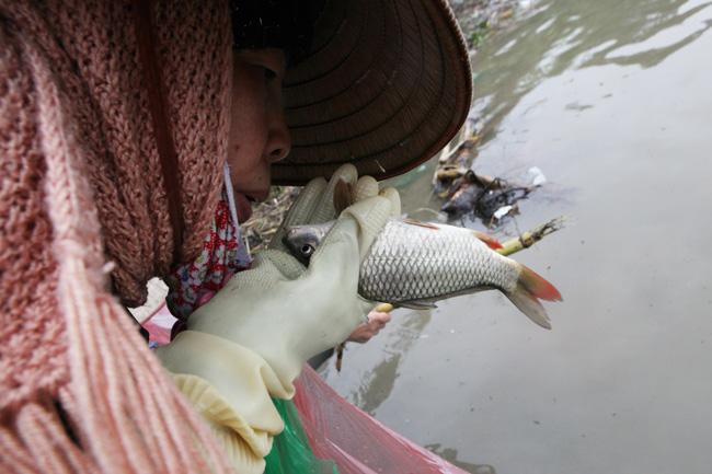 """Dầm mưa rét kêu gọi """"thả cá đừng thả túi nilon"""" - 14"""