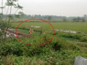 Tin tức trong ngày - Dân hô cướp, CSGT lao xuống ruộng bắt 2 đối tượng bỏ chạy