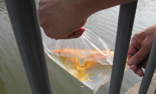Tiễn ông Táo: Người thả cá phóng sinh, kẻ kéo lưới thu về - 1