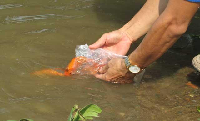 Tiễn ông Táo: Người thả cá phóng sinh, kẻ kéo lưới thu về - 11
