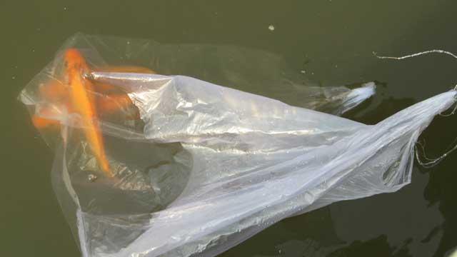 Tiễn ông Táo: Người thả cá phóng sinh, kẻ kéo lưới thu về - 7