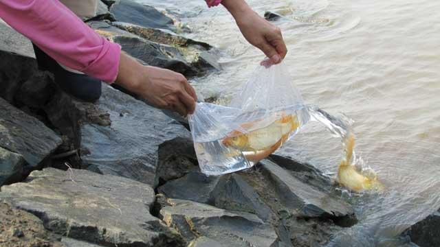 Tiễn ông Táo: Người thả cá phóng sinh, kẻ kéo lưới thu về - 9