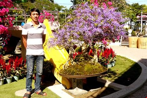 Ngỡ ngàng ngắm cây mai lạ có hoa màu... tím - 6