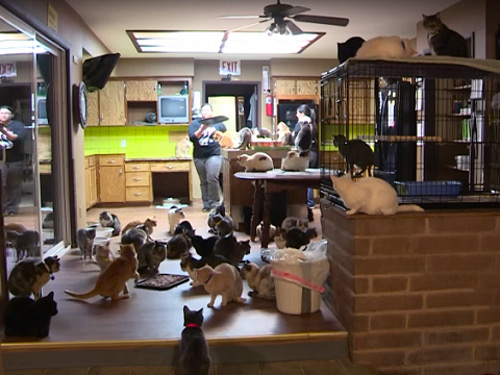Người phụ nữ 'cuồng mèo', nuôi 1.100 con trong nhà - 1