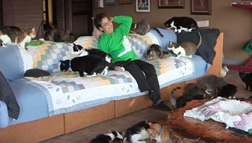 Người phụ nữ 'cuồng mèo', nuôi 1.100 con trong nhà - 2