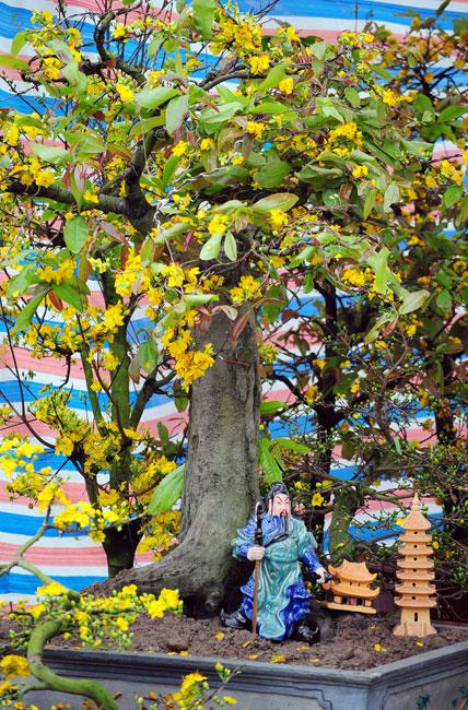 Mai vàng Bình Định vượt ngàn cây số đón Tết ở Thủ đô - 10