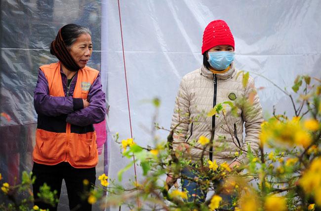 Mai vàng Bình Định vượt ngàn cây số đón Tết ở Thủ đô - 11