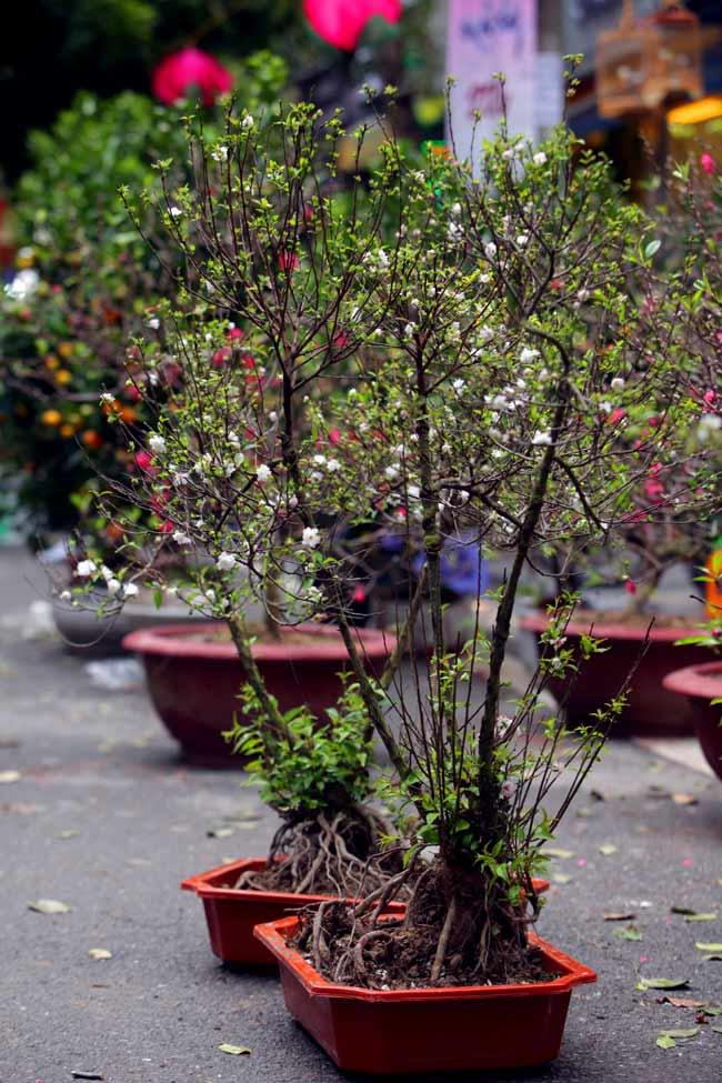 Ảnh: Sắc màu chợ hoa xuân phố cổ ngày cận Tết - 9