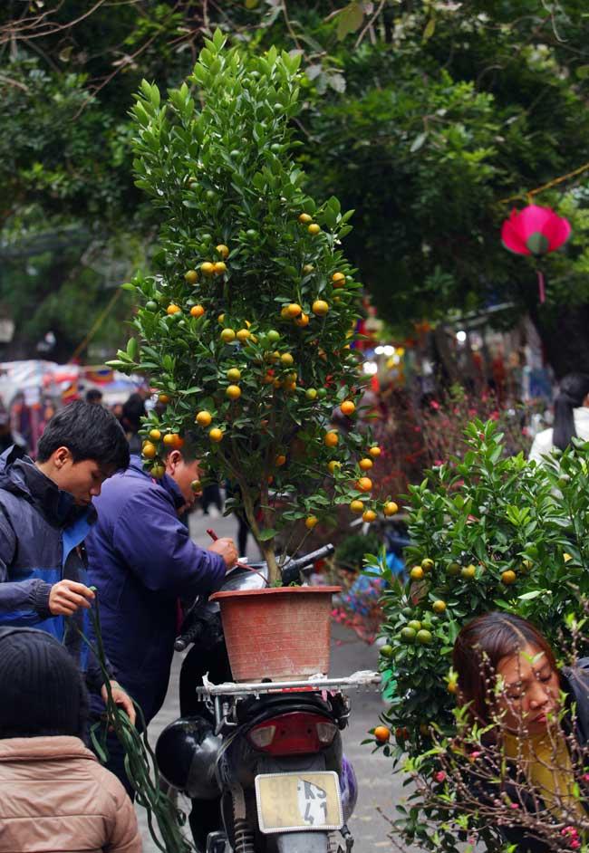 Ảnh: Sắc màu chợ hoa xuân phố cổ ngày cận Tết - 10