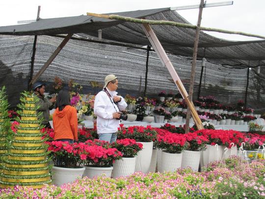 Cây mai cổ rao giá 2 tỉ đồng ở Đà Nẵng - 10