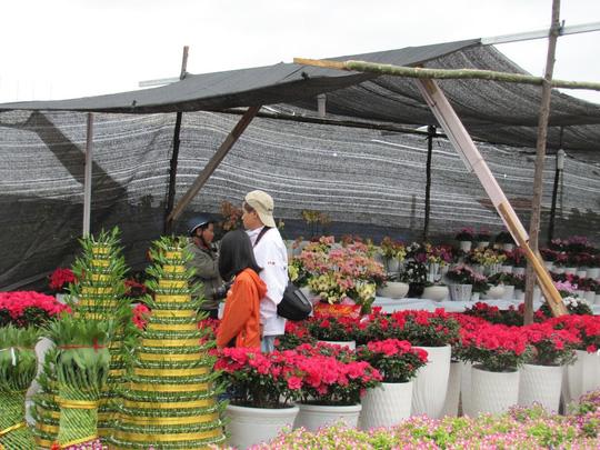 Cây mai cổ rao giá 2 tỉ đồng ở Đà Nẵng - 16
