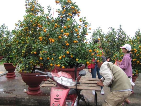 Cây mai cổ rao giá 2 tỉ đồng ở Đà Nẵng - 17
