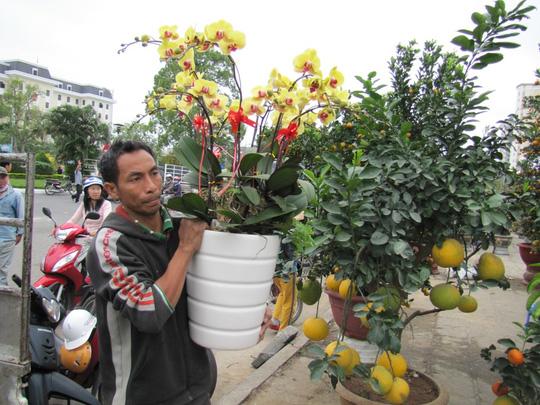 Cây mai cổ rao giá 2 tỉ đồng ở Đà Nẵng - 4