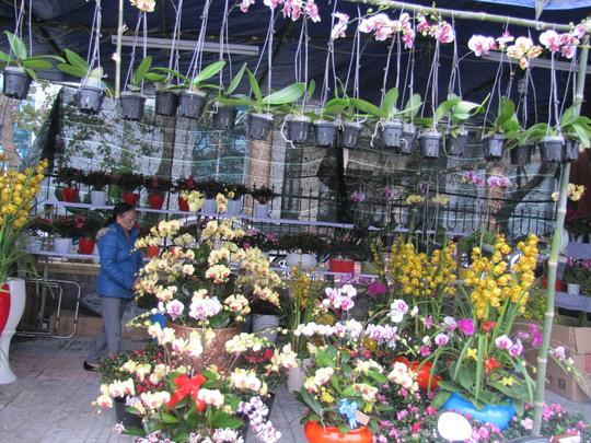 Cây mai cổ rao giá 2 tỉ đồng ở Đà Nẵng - 7