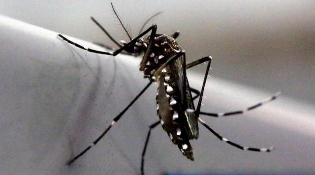 """Đề xuất triệt sản muỗi đực để ngăn virus """"ăn não"""" Zika - 1"""