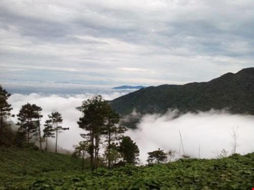 """Tết này lên Tam Đảo """"săn"""" mây - 8"""
