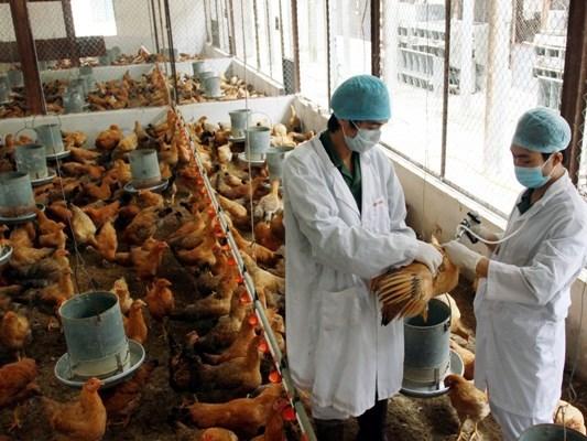 Những dịch cúm gây chết người đang đe dọa Việt Nam - 1