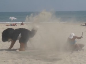 """Video clip: Những chú Cún không sợ """"cẩu tặc"""""""