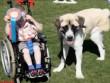 Chuyện cảm động về cậu bé ngồi xe lăn và chú chó 3 chân