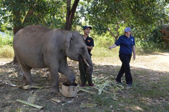 Chú voi rừng Việt Nam khiến chuyên gia quốc tế xúc động - 3