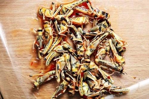 Chàng trai ăn 16.000 con sâu bọ vì... nghiện - 2