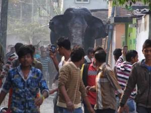 Video: Voi khổng lồ phá nhà cửa, giẫm nát ô tô ở Ấn Độ