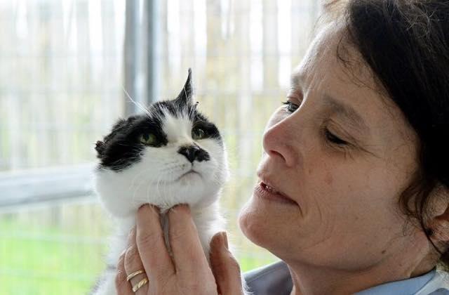Cô mèo nổi tiếng vì mất nửa đầu - 1