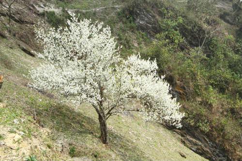 Ngắm 'thiên đường hoa' trên cao nguyên đá - 2