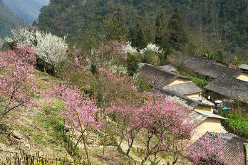 Ngắm 'thiên đường hoa' trên cao nguyên đá - 4