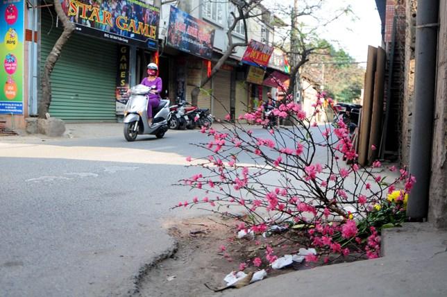 Sau Tết, rác đào, quất tràn ngập phố phường Hà Nội - 1