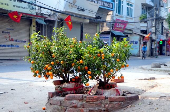 Sau Tết, rác đào, quất tràn ngập phố phường Hà Nội - 10