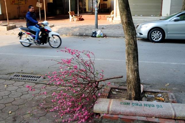 Sau Tết, rác đào, quất tràn ngập phố phường Hà Nội - 6