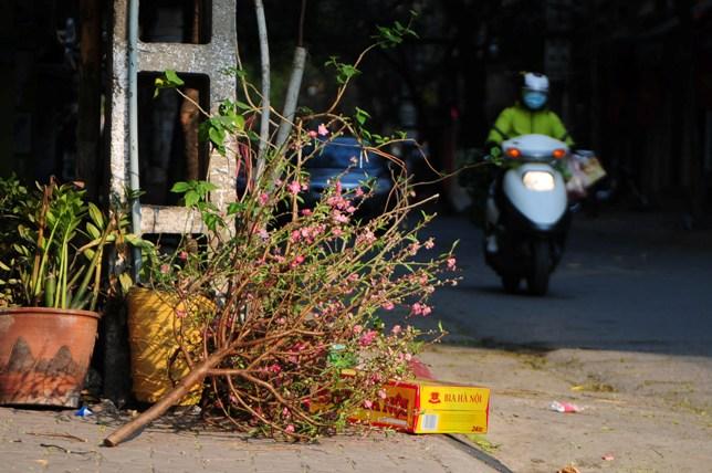 Sau Tết, rác đào, quất tràn ngập phố phường Hà Nội - 7