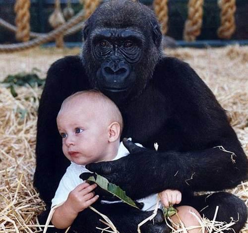 Những câu chuyện kỳ lạ về loài khỉ - 1
