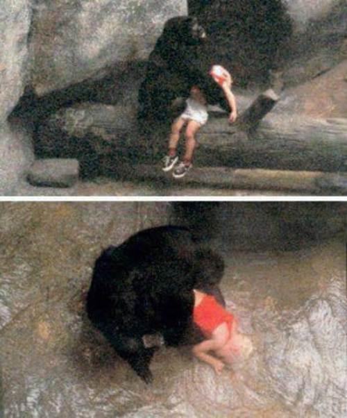 Những câu chuyện kỳ lạ về loài khỉ - 2