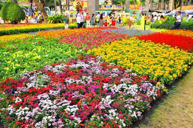 Ngày nghỉ cuối, người Sài Gòn đắm mình trong sắc hoa xuân - 5