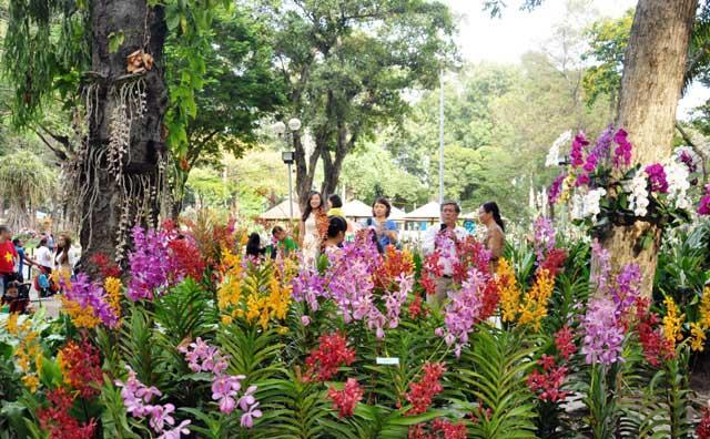 Ngày nghỉ cuối, người Sài Gòn đắm mình trong sắc hoa xuân - 7