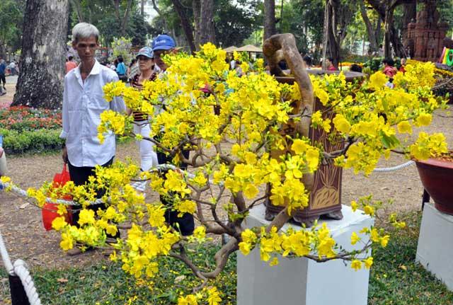 Ngày nghỉ cuối, người Sài Gòn đắm mình trong sắc hoa xuân - 9