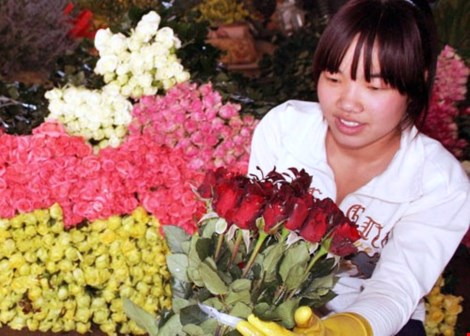 """""""Cháy"""" hoa hồng ngày lễ Tình nhân - 1"""