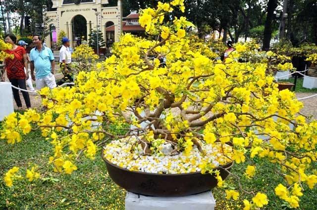 """Ngắm cây khế """"hái vàng"""" tại Hội hoa xuân TP.HCM - 13"""