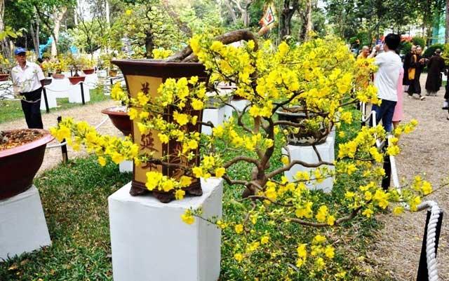 """Ngắm cây khế """"hái vàng"""" tại Hội hoa xuân TP.HCM - 14"""