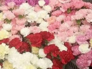 Rửa bát kiếm tiền tặng hoa 800 bạn nữ dịp Valentine
