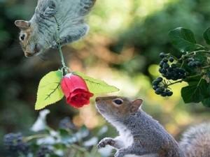 'Đôi tình nhân' lãng mạn nhất thế giới ngày Valentine