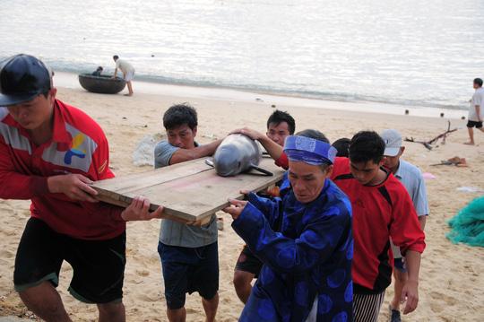"""Cá voi """"lụy"""" dạt vào bờ biển Quy Nhơn - 2"""