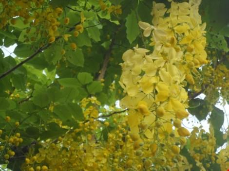 Xôn xao mùa hoa bò cạp giữa Sài thành - 8
