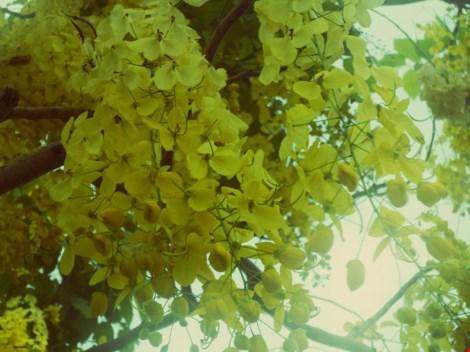 Xôn xao mùa hoa bò cạp giữa Sài thành - 1